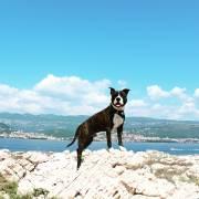 pes na dovolenke v zahraničí