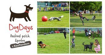 DogDays 2017 – festival psích športov s Kauflandom. Príďte sa baviť spolu!