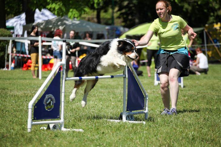 agility, dogdays