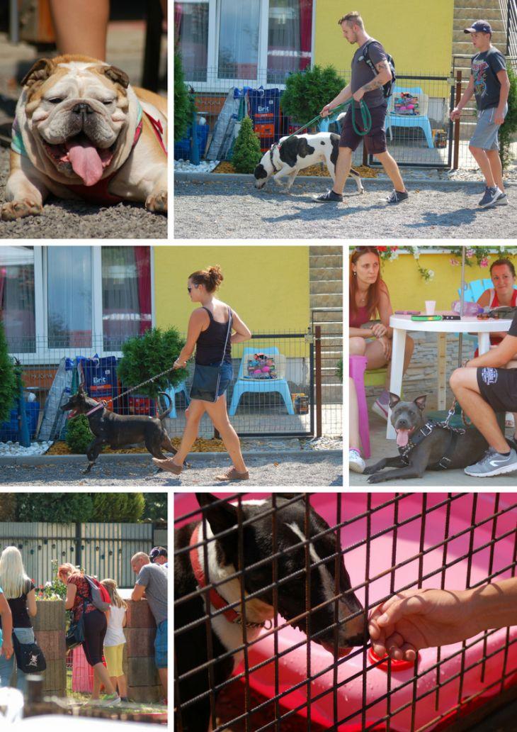 bullterrier rescue slovakia