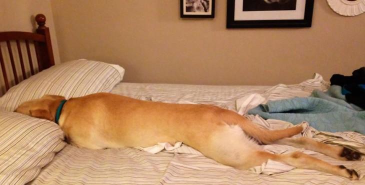 Psy, ktoré sa rozhodli, že túto noc patrí tvoja posteľ im!