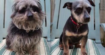 15 psov PRED a PO letnom strihu