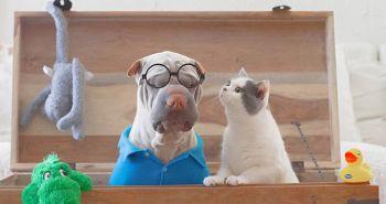 Najfotogenickejší šarpej na svete a jeho mačky sa stali neodlúčiteľnými kamarátmi!