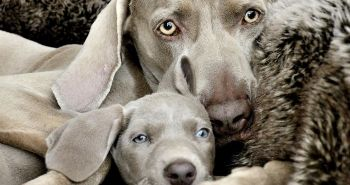 Psy so svojimi rozkošnými miniatúrami