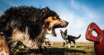 Dokonale načasované fotografie, ktoré robia zo psov gigantov