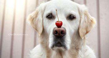 Milujem nos svojho psa!