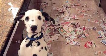 Niekto má doma psa, niekto zas demolátora!