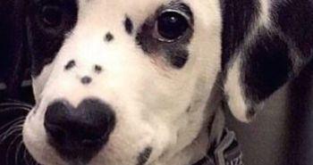 Psia láska ukrývajúca sa v nose!