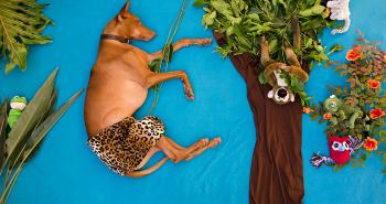 Tento pes prežíva najväčšie dobrodružstvá v spánku