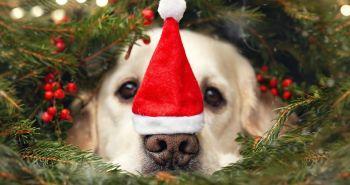 Mali sa teší na Vianoce!