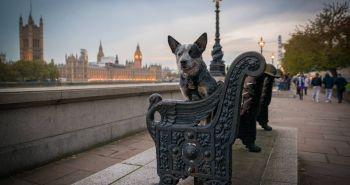Psí život v Londýne