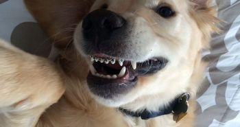 Aj psy môžu nosiť strojček na zuby