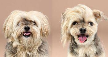 8 najlepších psích účesov. Inšpiruj sa a skoč do psieho salónu s tvojim miláčikom.