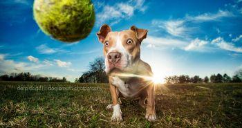 Tieto psie trdielka ti rozhodne zdvihnú náladu na maximum!