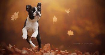 Psy milujú jeseň! Tieto precítené fotografie ťa o tom presvedčia