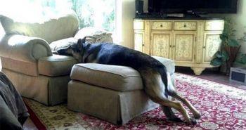 Týchto 15 psov vie ako na to, aby neporušili pravidlá a dosiahli svoj cieľ