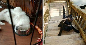 15 fotografií psov, ktoré pôsobia naozaj divne!