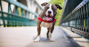 Víťazné fotografie psov na celosvetovo prestížnej súťaži organizácie the Kennel Club