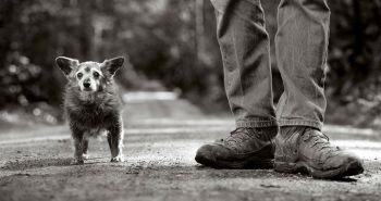 15 úžasných fotografií psích seniorov zachytených očami Nancy LeVine